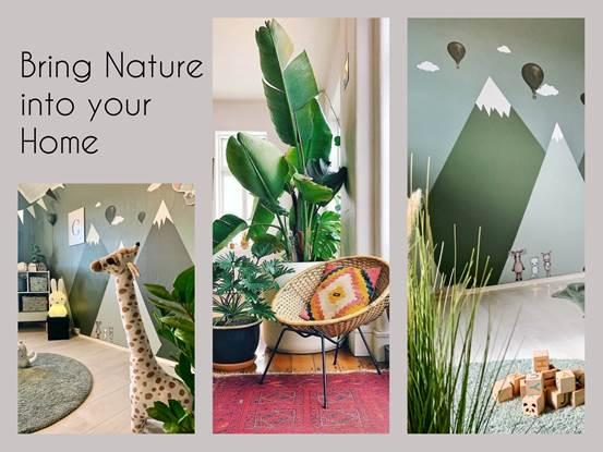 Ποια φυτά εσωτερικού χώρου, είναι κατάλληλα για τον καθαρισμό του αέρα του σπιτιου